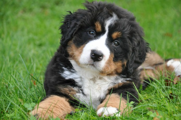 La elección de una mascota es una reflexión importante a tener en cuenta antes de adquirir cualquier animal