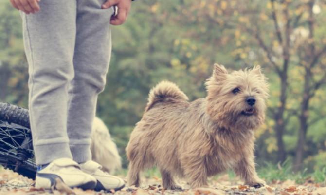 Comprar una mascota conlleva una gran responsabilidad