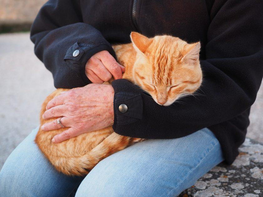 Pautas para conseguir que tu gato sea más sociable
