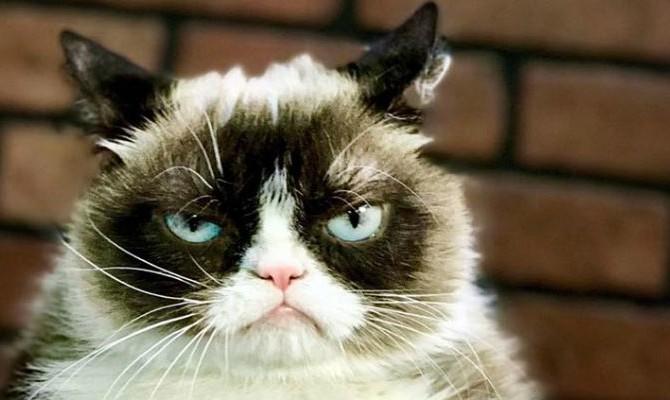 The Grumpy Cat.