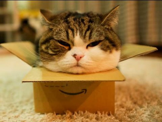 Maru es un gato famoso en Japón por su afición a las cajas.
