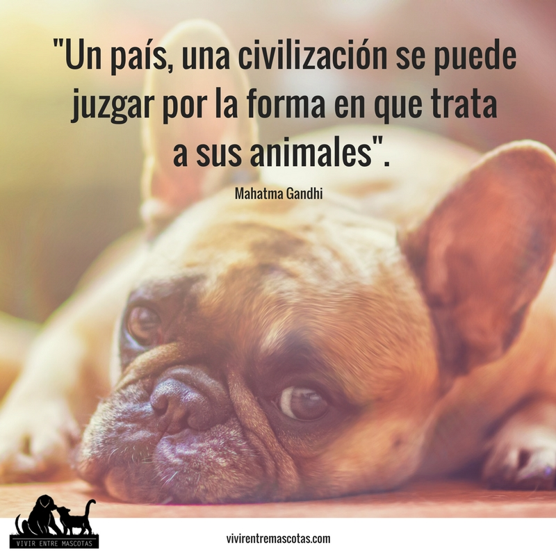 frases animales