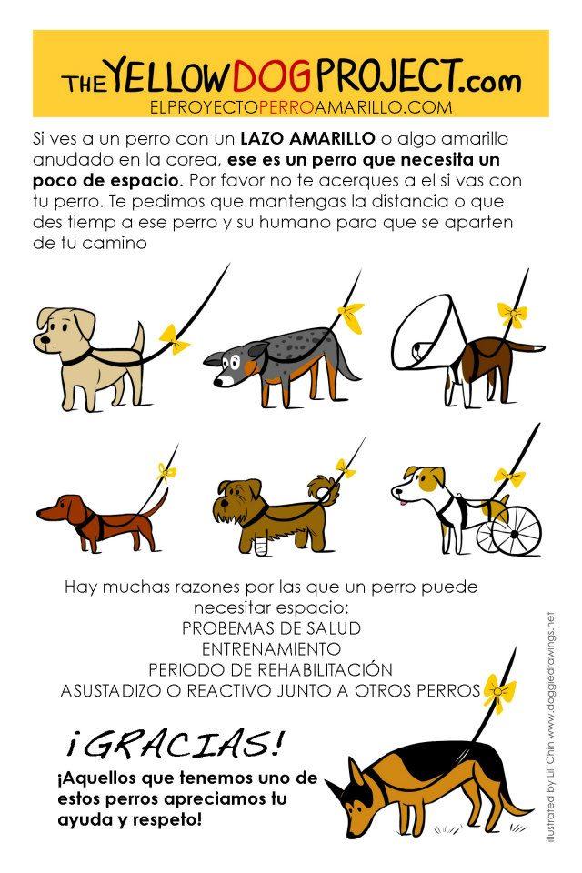 pañuelo amarillo para perros: significado