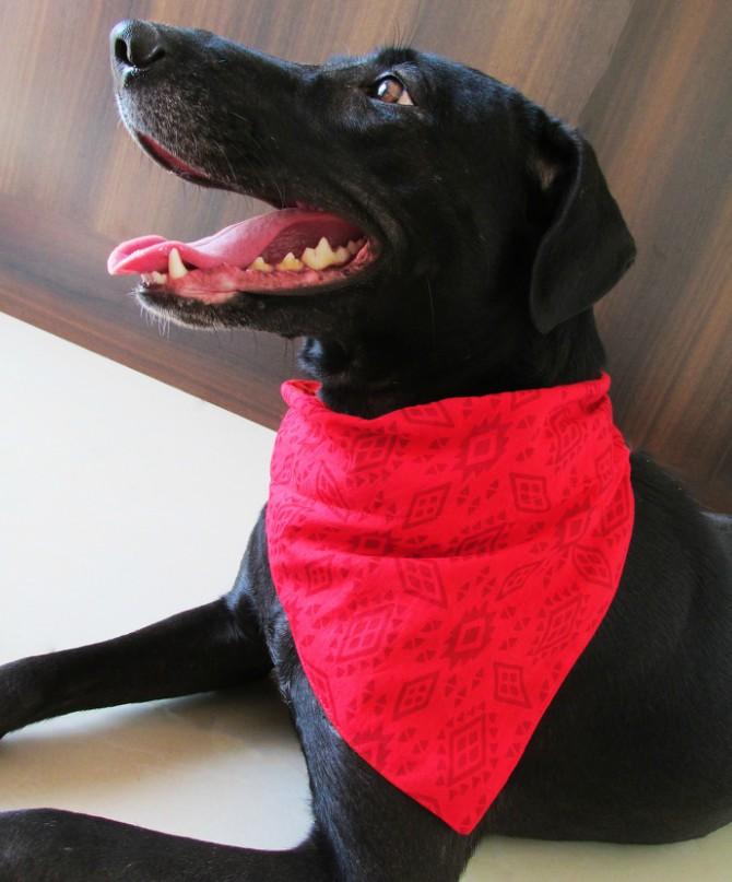 El pañuelo rojo, una de las opciones favoritas para las mascotas.