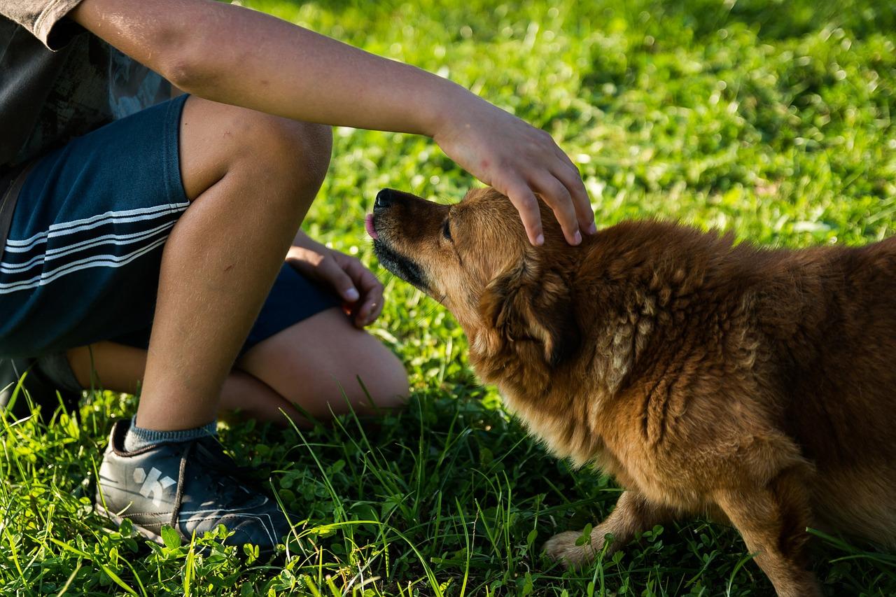 Ansiedad en los perros
