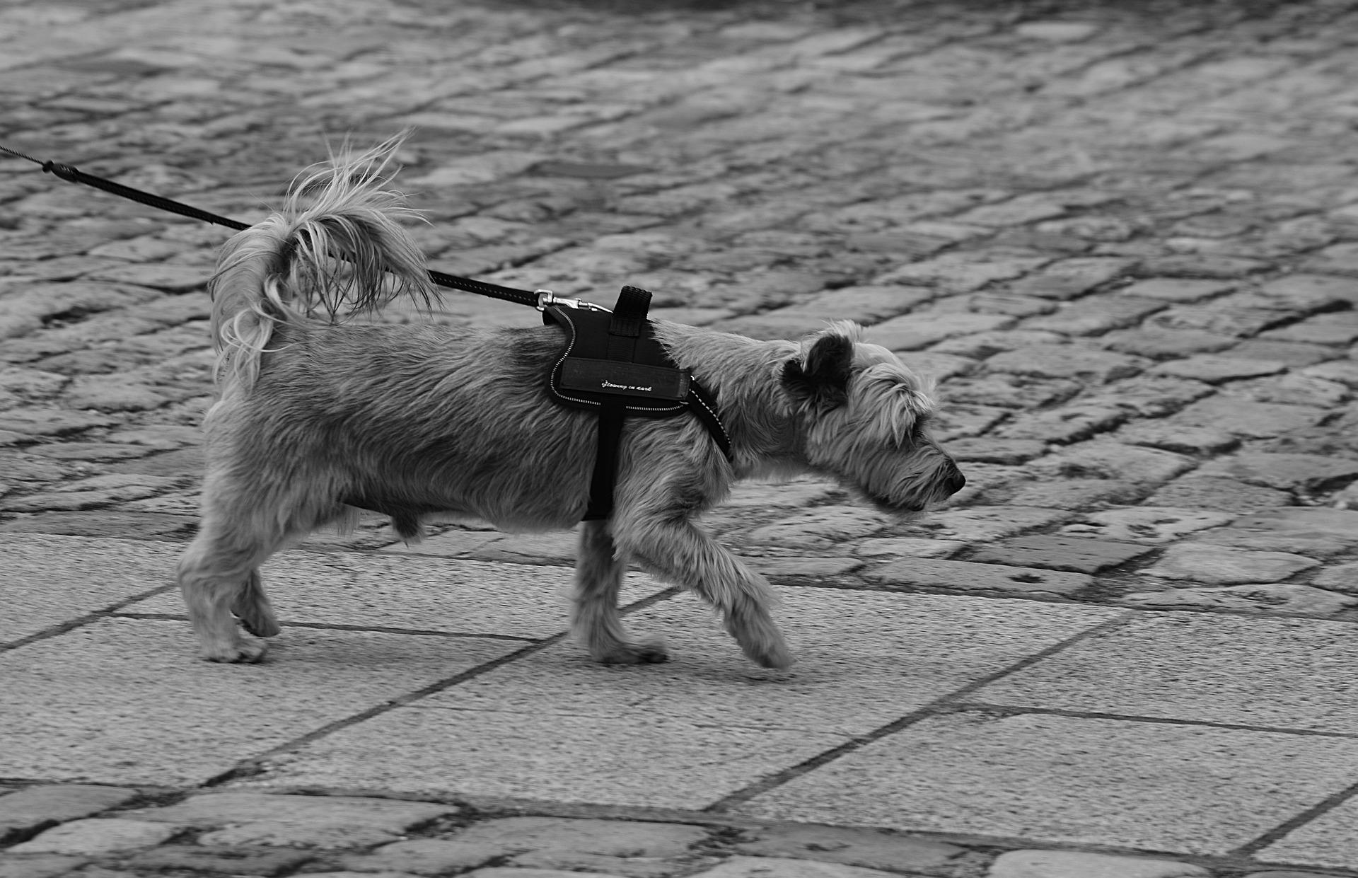 Correas para perros