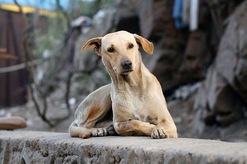Comunicarse con perros