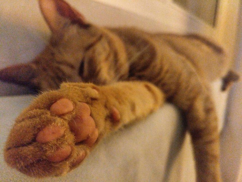 Horas de sueño de un gato