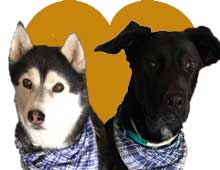 mascotas-del-mes-marzo18