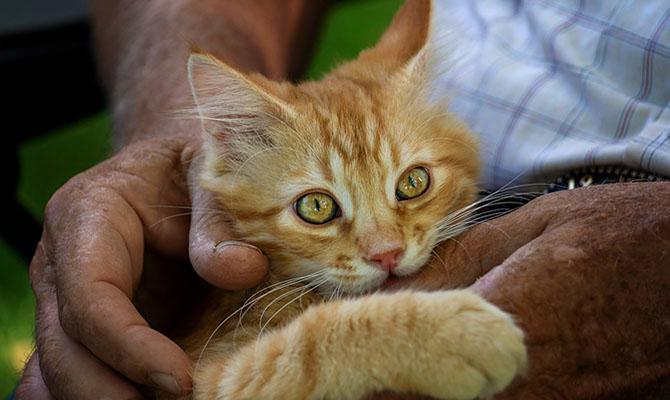 Cuidados del gato: cómo cepillarle