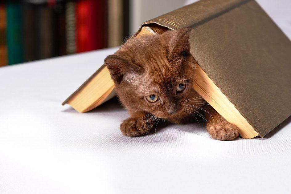 Libros de animales