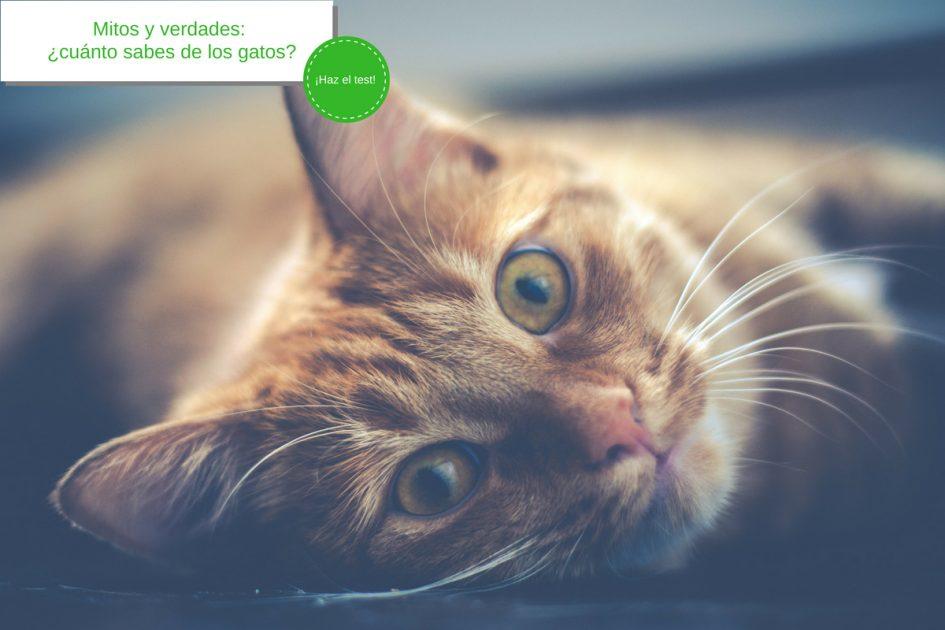 Mitos sobre los gatos (Test)