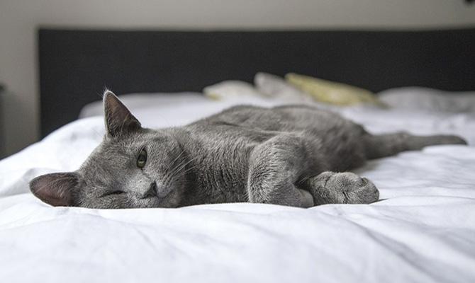 Dueños de animales: errores con gatos