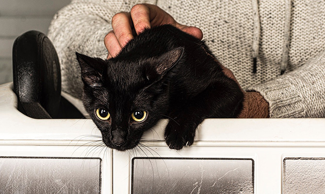 Dueños de mascotas: gatos