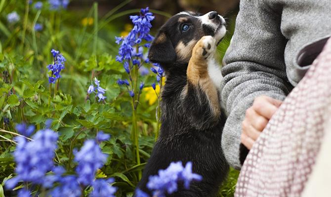 Dueños de mascotas: perros