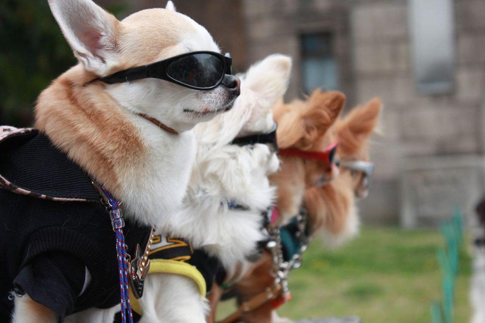 Perros de ficción