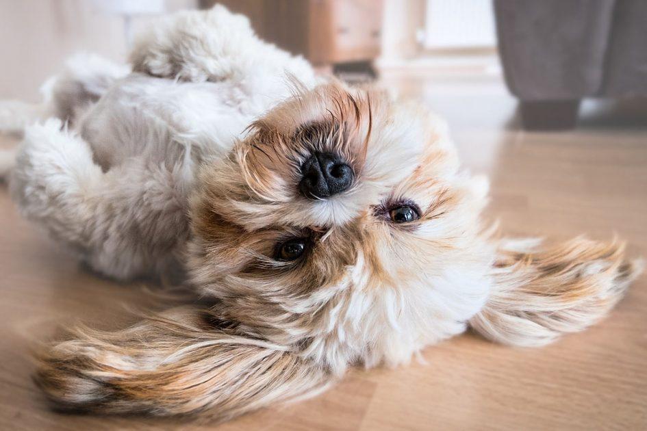 Bienestar animal en casa: mascotas felices