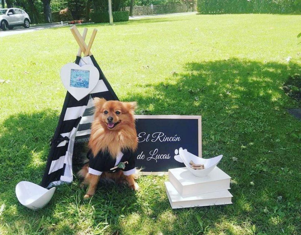 Perros en bodas: los mejores invitados
