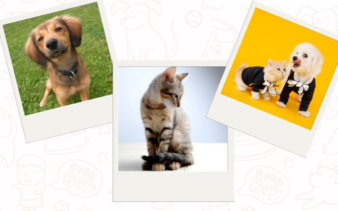 Ideas de regalo para mascotas