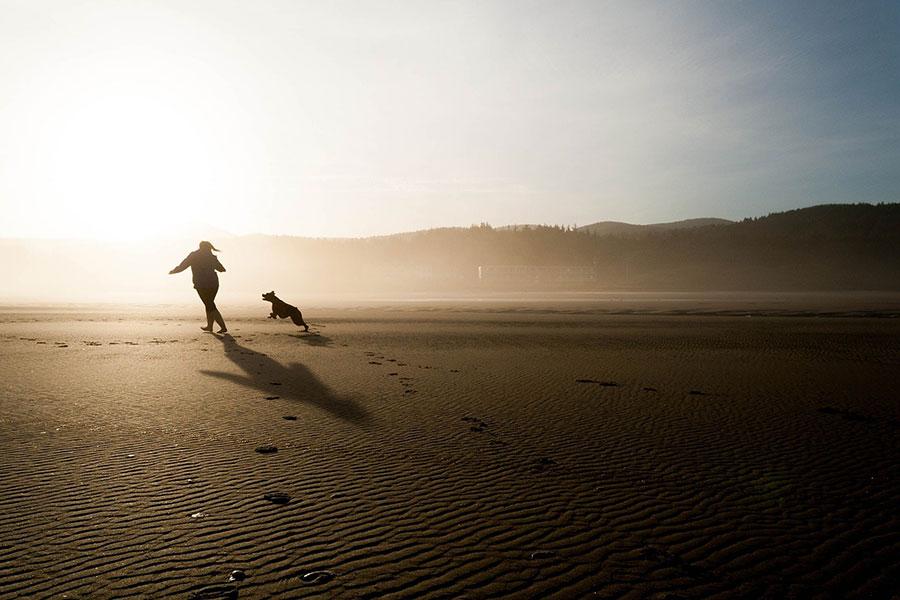 Lugares de España para visitas con perros