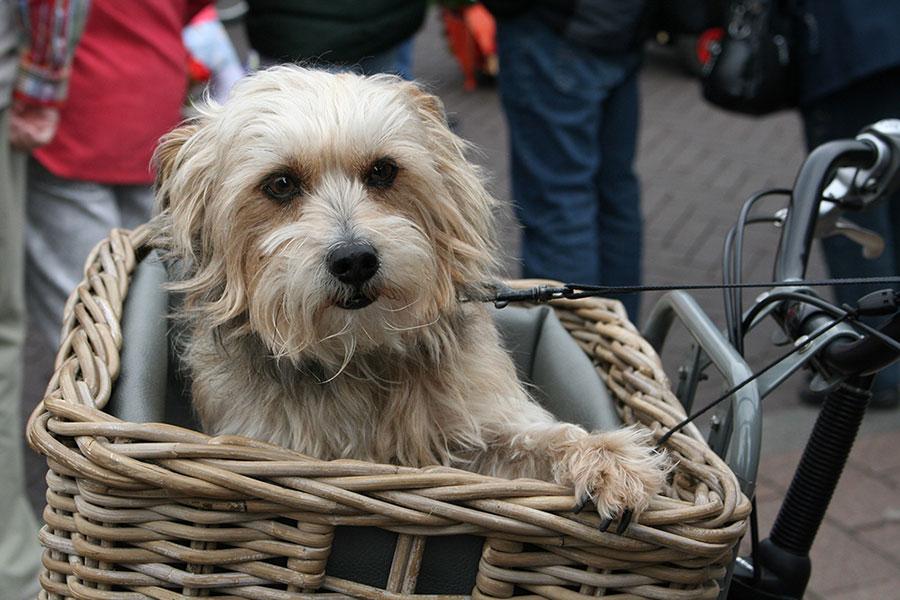 Como llevar a tu perro en bici