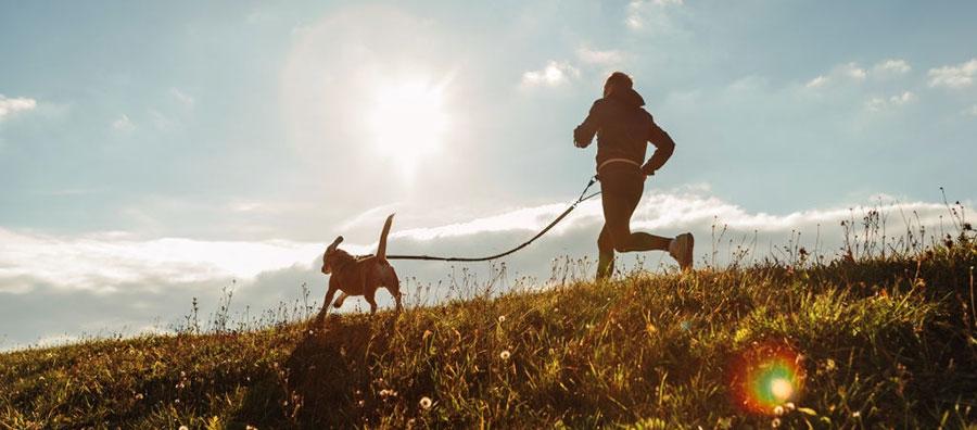Entrenar con perro